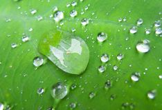 Drop on leaves. Drop leaf leaves royalty free stock photography
