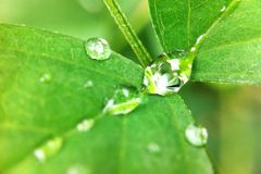 Drop on leaves. Drop leaves leaf plant Royalty Free Stock Photo
