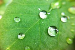 Drop on leaves. Drop leaves leaf plant royalty free stock photography
