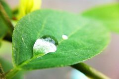 Drop on leaves. In garden royalty free stock photos