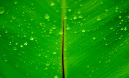 Drop on leaves Stock Photo