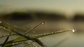 A drop of morning dew Stock Photos