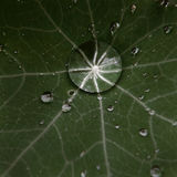 Drop of morning dew on a flower leaf Stock Images