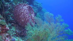 Drop off on a coral reef. With huge colorful sea fans and sponge corals stock footage