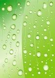 Drop Plant. Drop Green Plant Vector Drawing Stock Image