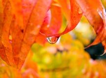 drop rain 库存图片