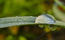 Drop of rain water hanging from the grass Stock Photography