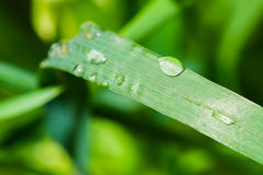 Drop of rainwater on a grass blade Stock Photography