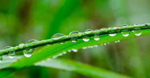 Drop of rainy water on grass rod Royalty Free Stock Photos