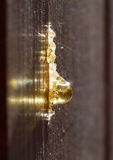 Drop of resin oozing from wooden fence, backlit by sun Stock Images