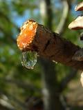 drop rosin Στοκ Εικόνες