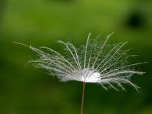 A drop in the seed. A small drop of rain in seeds Royalty Free Stock Photography