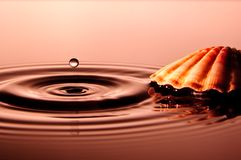 Drop with Shell Stock Image