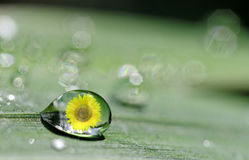 Drop and sunflower Royalty Free Stock Image