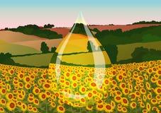 Drop of sunflower Stock Image