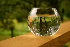 Drop of water. The garden is reflected in water Royalty Free Stock Photography