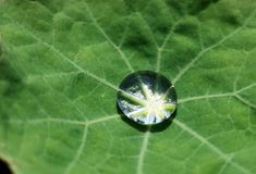 Drop of water. Transparent drop of water on a leaf Royalty Free Stock Photos