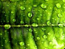 Drop water Stock Photos