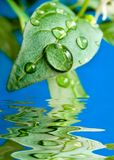 Drop water. Green leaf with a water drop Royalty Free Stock Photo