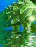 Drop water. Green leaf with a water drop Royalty Free Stock Image