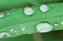 Drop of water. On green leaves royalty free stock images