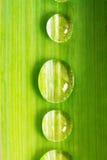 Drop  water closeup Stock Images