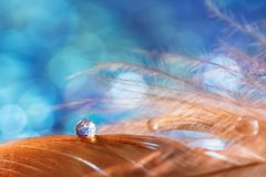 A drop of water dew on a fluffy feather close-up on blue blurred background. Abstract romantic magical artistic image for the. Holiday stock photo