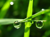 Drop of Water dew. On morning Royalty Free Stock Photo