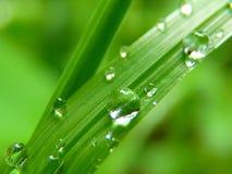 Drop Of Water, Drip, Close, Grass Stock Image