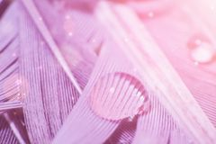 Drop of water on feather in violet color, macro photo.  royalty free stock photo