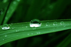 The drop of water  on green leaf Royalty Free Stock Images