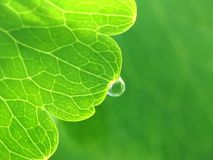 Drop of water on a green leaf Royalty Free Stock Images