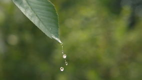 Drop of Water on a Green Leaf
