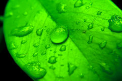 Drop of water on the green leaf Royalty Free Stock Photo