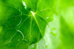 Drop of water on green leaves Royalty Free Stock Image