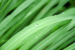 Drop of water. On green leaves stock photo