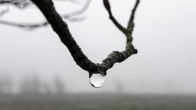 Drop of water hanging on a branch stock photography