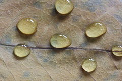 Drop Water on Leaf Royalty Free Stock Photos