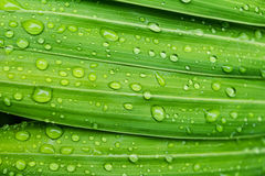 Drop water on leaf fresh nature Royalty Free Stock Photo