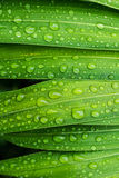 Drop water on leaf fresh nature Stock Images