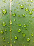 Drop. Water leaf green Stock Photography