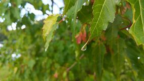 Drop of water on leaf Stock Photography