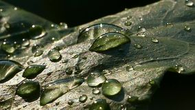 Drop water on leaf. stock footage