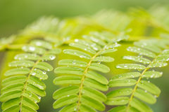 Drop water on leaves after rain Royalty Free Stock Images