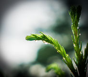 Drop of water on the plant. In rainy day Stock Image