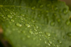 Drop water on plants Royalty Free Stock Photos