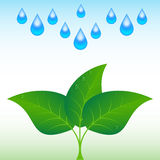Drop of water with sprout. Royalty Free Stock Photo