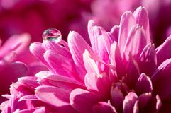 Dew drop on flower Stock Images