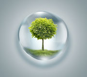 Drop of water with tree inside Stock Photography