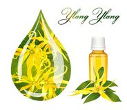 Drop of ylang ylang Royalty Free Stock Images